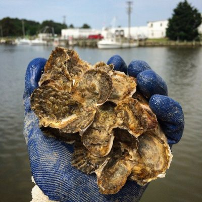 Oyster Recovery Partnership