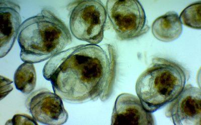 Shellfish Aquaculture Innovation Laboratory (SAIL)