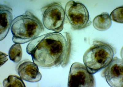 Photo of Larvae